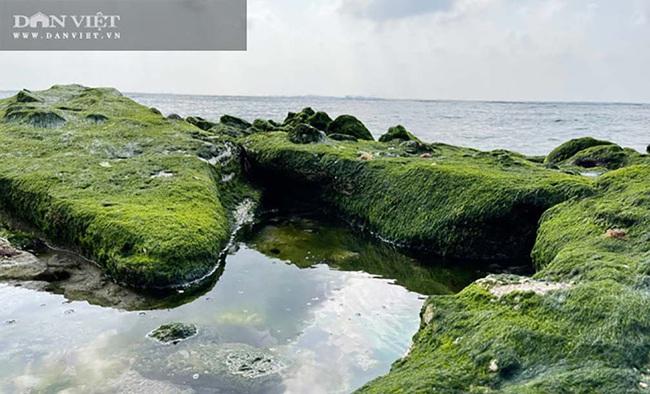 Du lịch sau Tết: Mê hoặc rêu xanh nơi sóng tự tình với đá ở đảo Lý Sơn   - Ảnh 4.