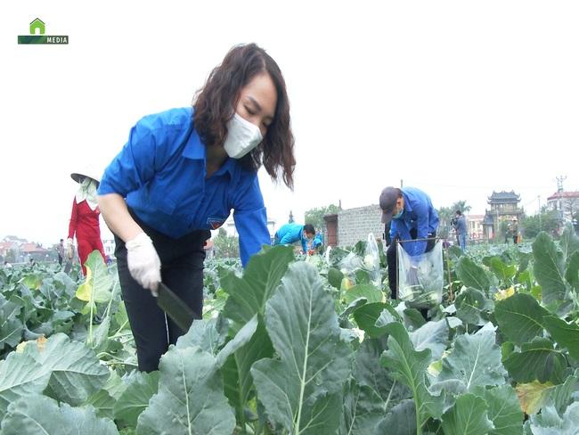 Clip: Nông dân Hải Dương thu hoạch rau màu trao tặng chốt kiểm dịch và người dân vùng dịch - Ảnh 2.