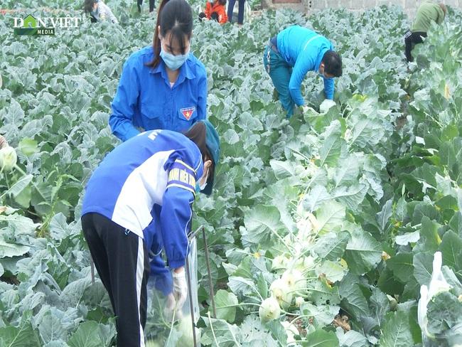 Clip: Nông dân Hải Dương thu hoạch rau màu trao tặng chốt kiểm dịch và người dân vùng dịch - Ảnh 4.