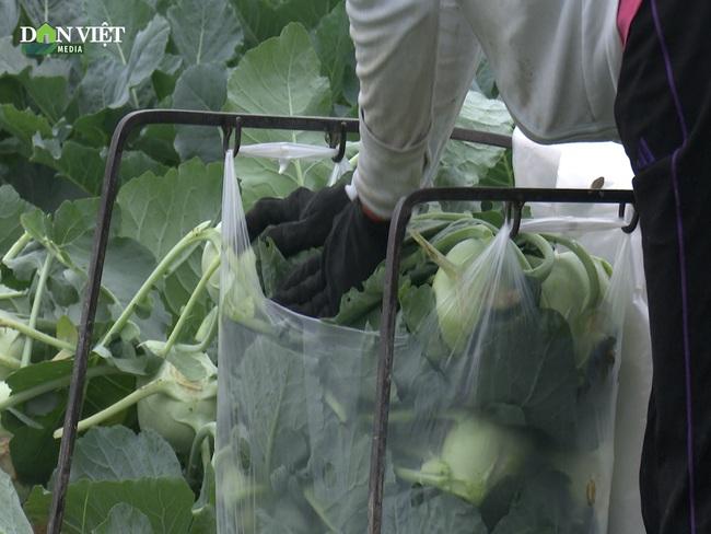 Clip: Nông dân Hải Dương thu hoạch rau màu trao tặng chốt kiểm dịch và người dân vùng dịch - Ảnh 3.