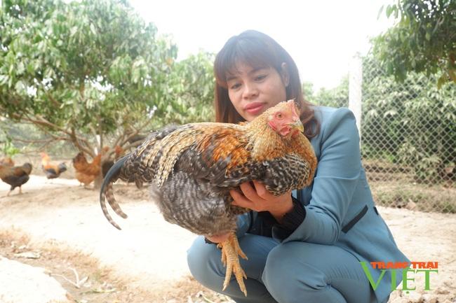 """Bắc Giang: Tất bật nuôi gà đồi đặc sản, gà trống thiến bán Tết, nữ nông dân """"bỏ túi"""" hàng trăm triệu đồng. - Ảnh 1."""