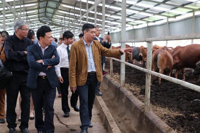 Triết lý nông nghiệp tuần hoàn ở trại trâu bò lớn nhất miền Bắc - Ảnh 3.