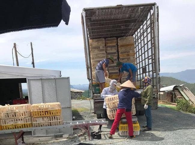 Giá gia cầm hôm nay 20/2: Giá gà, vịt thịt diễn biến khó lường, người nuôi lại thêm nỗi lo mới - Ảnh 1.
