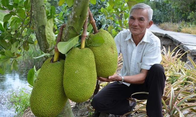 Giá mít Thái ở ĐBSCL lại tăng cao, nông dân trồng mít Thái tỉnh Tiền Giang có mít bán là trúng đậm - Ảnh 1.