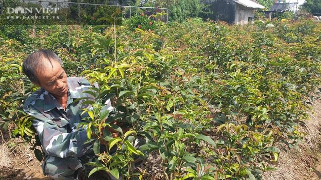 Thái Bình: Quanh năm ở nhà làm cây giống, lão nông đếm tiền mỏi tay   - Ảnh 4.