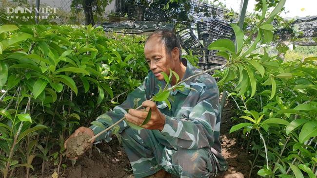 Thái Bình: Quanh năm ở nhà làm cây giống, lão nông đếm tiền mỏi tay   - Ảnh 1.