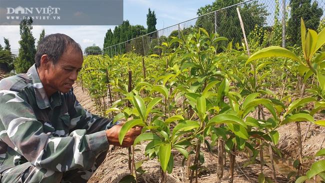 Thái Bình: Quanh năm ở nhà làm cây giống, lão nông đếm tiền mỏi tay   - Ảnh 5.