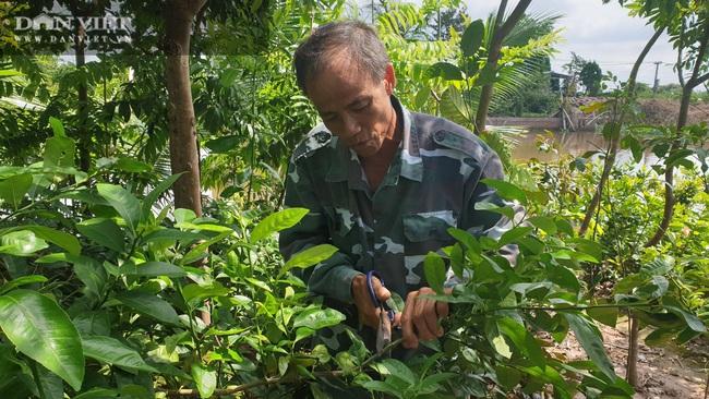 Thái Bình: Quanh năm ở nhà làm cây giống, lão nông đếm tiền mỏi tay   - Ảnh 3.