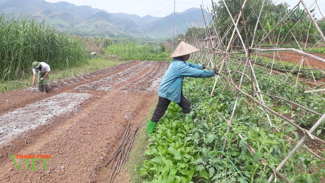 Yên Châu tập trung phát triển sản xuất nông nghiệp theo hướng hàng hóa - Ảnh 1.