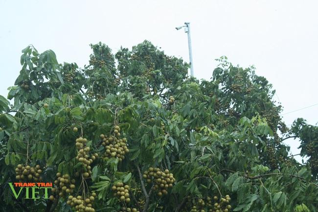 Yên Châu tập trung phát triển sản xuất nông nghiệp theo hướng hàng hóa - Ảnh 4.