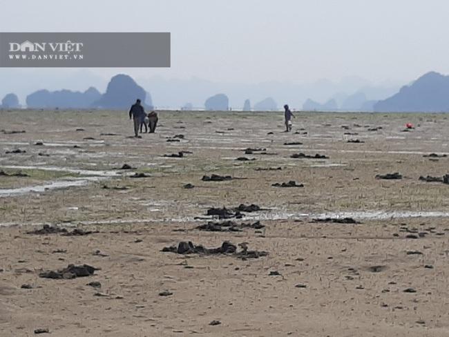 Quảng Ninh: Chủ đầu tư khu đô thị Phương Đông lấn chiếm đất, lấp bãi triều - Ảnh 4.