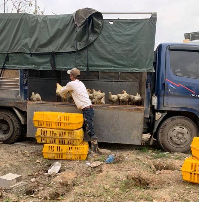 Giá gia cầm hôm nay 22/2: Giá gà công nghiệp có xu hướng giảm, người nuôi gà màu, vịt thịt chưa hết lo - Ảnh 1.