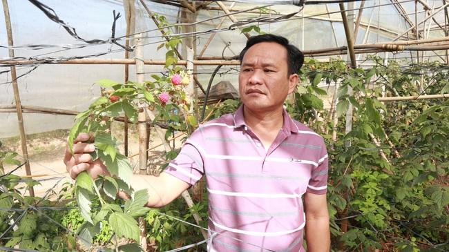 3 cá nhân ở Lâm Đồng được Chủ tịch nước tặng thưởng Huân chương Lao động là ai? - Ảnh 1.
