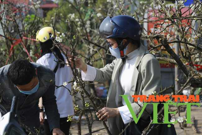 Đào phai mai tàn, người Hà Nội lại chơi thứ cây gốc rêu mốc hoa trăng muốt - Ảnh 5.