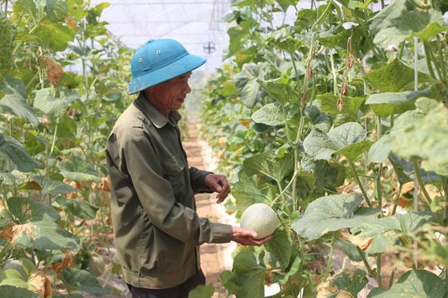 Hơn 500 mô hình hay giúp nông dân tăng thu nhập - Ảnh 1.