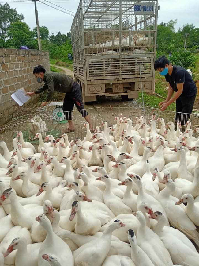 Giá gia cầm hôm nay 23/2: Cập nhật giá các loại gà, vịt mới nhất tại ba miền, giá gà công nghiệp tăng nhẹ - Ảnh 1.