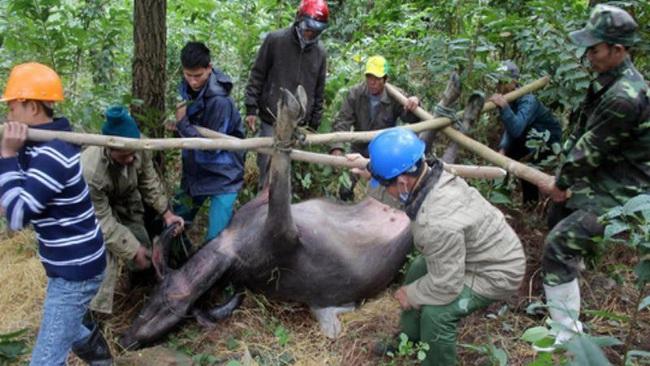 Điện Biên: hỗ trợ gia súc bị chết rét, làm nghiêm, không để trục lợi chính sách - Ảnh 3.