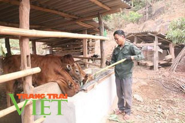 Hội Nông dân Sơn La: Làm tốt các hoạt động dạy nghề, hỗ trợ nông dân - Ảnh 7.