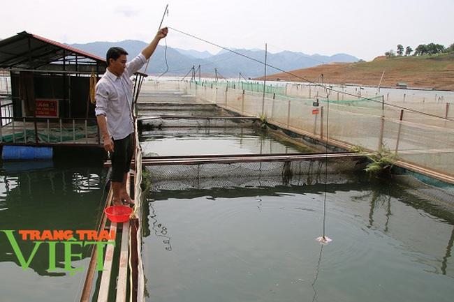 Quỳnh Nhai mở rộng quy mô nuôi cá lồng theo chuỗi giá trị bền vững - Ảnh 7.