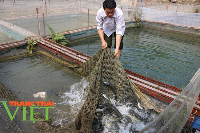 Quỳnh Nhai mở rộng quy mô nuôi cá lồng theo chuỗi giá trị bền vững - Ảnh 6.