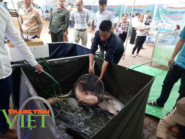Quỳnh Nhai mở rộng quy mô nuôi cá lồng theo chuỗi giá trị bền vững - Ảnh 5.