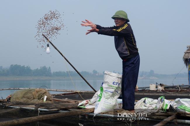 Hà Nội: người nuôi cá lồng - Ảnh 1.