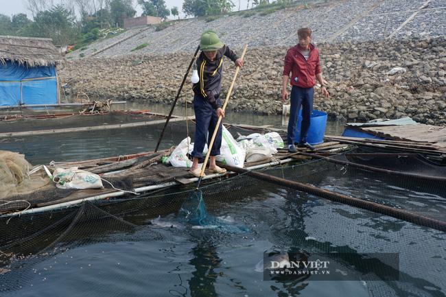 """Một ông nông dân Thủ đô """"đau đầu"""" vì 8 tấn cá không bán được cho ai, trắm cỏ 4kg/con cũng không ai mua - Ảnh 3."""