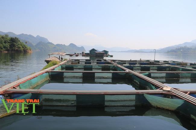 Quỳnh Nhai mở rộng quy mô nuôi cá lồng theo chuỗi giá trị bền vững - Ảnh 2.