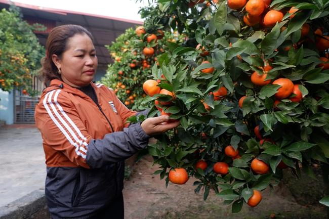 Nữ nông dân xứ vải thiều thu tiền tỷ từ... trồng cam  - Ảnh 1.