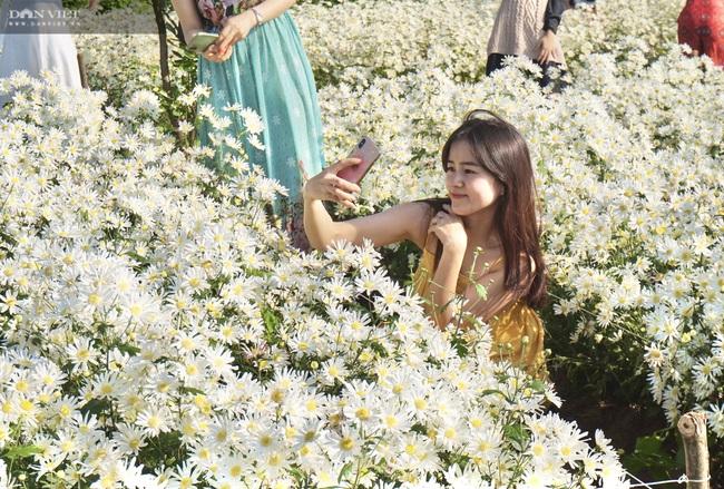 Đà Nẵng: Vườn hoa cúc họa mi có một không hai này ở đâu mà dân tình đổ xô đi check in - Ảnh 10.