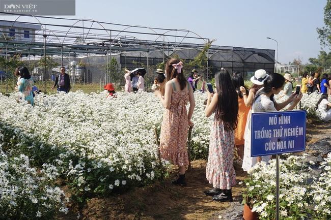 Đà Nẵng: Vườn hoa cúc họa mi có một không hai này ở đâu mà dân tình đổ xô đi check in - Ảnh 2.
