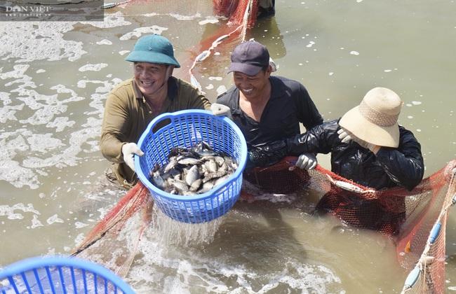 Đà Nẵng: Nuôi loài cá là đặc sản của vùng, lão nông thu tiền tỷ mỗi năm - Ảnh 2.
