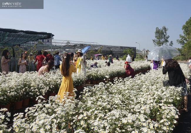 Đà Nẵng: Vườn hoa cúc họa mi có một không hai này ở đâu mà dân tình đổ xô đi check in - Ảnh 3.