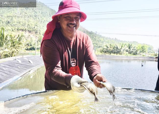 Đà Nẵng: Nuôi loài cá là đặc sản của vùng, lão nông thu tiền tỷ mỗi năm - Ảnh 1.