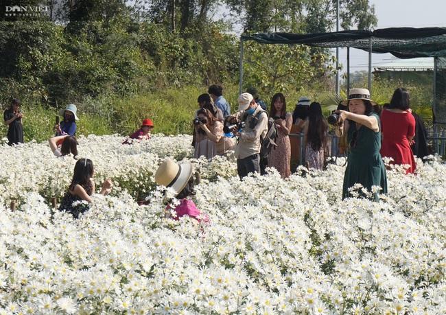 Đà Nẵng: Vườn hoa cúc họa mi có một không hai này ở đâu mà dân tình đổ xô đi check in - Ảnh 5.