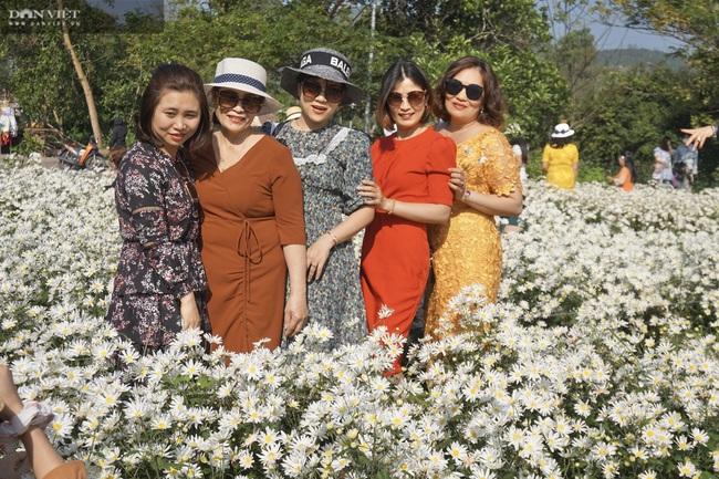 Đà Nẵng: Vườn hoa cúc họa mi có một không hai này ở đâu mà dân tình đổ xô đi check in - Ảnh 6.