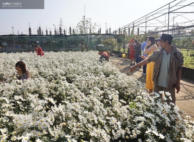 Đà Nẵng: Vườn hoa cúc họa mi có một không hai này ở đâu mà dân tình đổ xô đi check in - Ảnh 9.