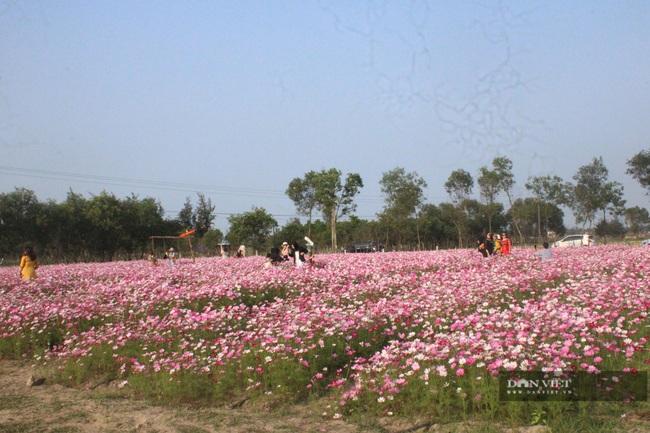 """Clip: Đồng hoa cánh bướm xuất hiện đầu tiên ở Hà Tĩnh gây """"sốt"""" sau tết - Ảnh 2."""