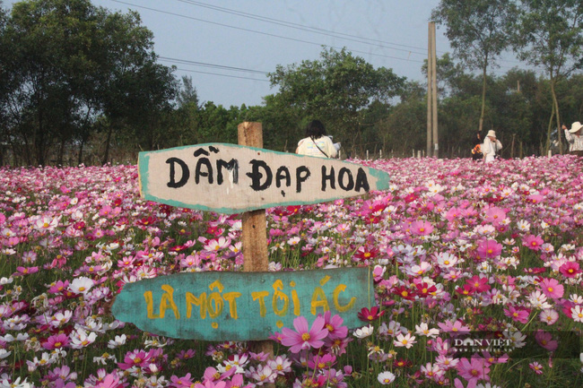"""Clip: Đồng hoa cánh bướm xuất hiện đầu tiên ở Hà Tĩnh gây """"sốt"""" sau tết - Ảnh 9."""