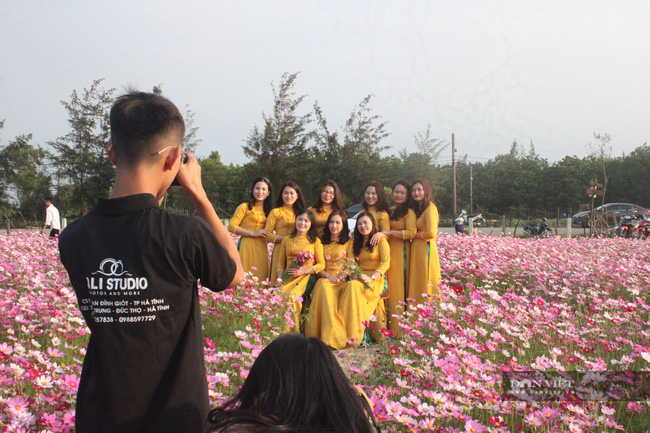 """Clip: Đồng hoa cánh bướm xuất hiện đầu tiên ở Hà Tĩnh gây """"sốt"""" sau tết - Ảnh 5."""