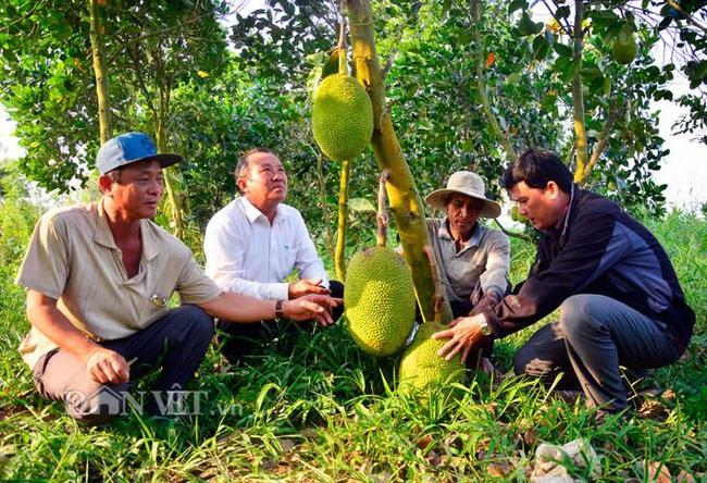 Trung Quốc nhập nhiều mít Thái của Việt Nam bằng đường nào, Trung Quốc trồng bao nhiêu hecta mít? - Ảnh 1.