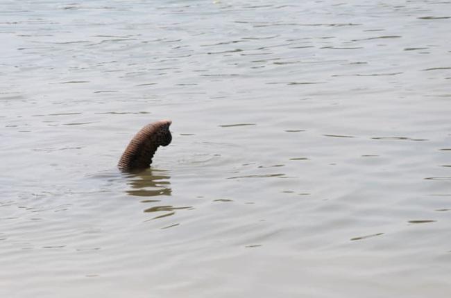 """7 lời giải thích hợp lý cho sự tồn tại """"Quái vật hồ Loch Ness"""" - Ảnh 8."""