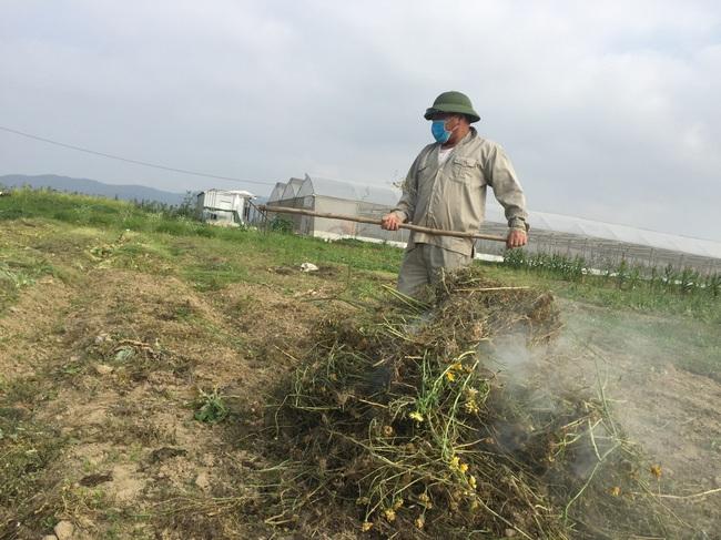 Nghệ An: Rau,củ rớt giá thảm sau Tết, nông dân xứ Nghệ chặt bỏ làm thức ăn cho gia súc   - Ảnh 8.