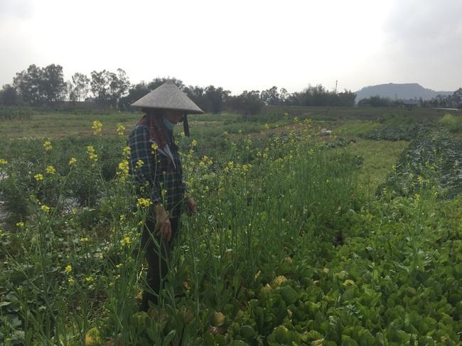 Nghệ An: Rau,củ rớt giá thảm sau Tết, nông dân xứ Nghệ chặt bỏ làm thức ăn cho gia súc   - Ảnh 7.