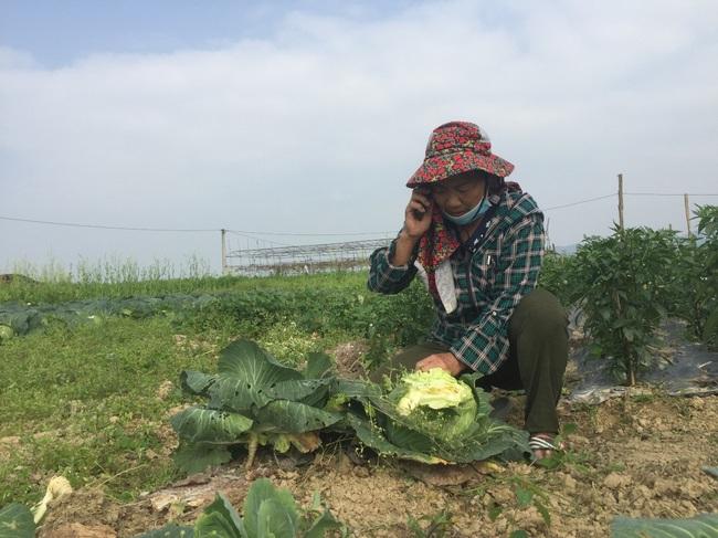 Nghệ An: Rau,củ rớt giá thảm sau Tết, nông dân xứ Nghệ chặt bỏ làm thức ăn cho gia súc   - Ảnh 6.