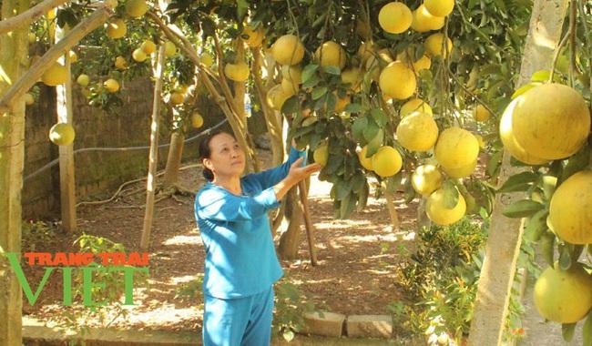 Hoà Bình: Phát triển nông nghiệp với thị trường tiêu thụ - Ảnh 1.