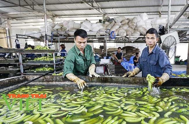 Hoà Bình: Phát triển nông nghiệp với thị trường tiêu thụ - Ảnh 2.