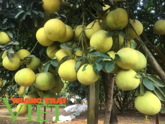 Hoà Bình: Phát triển nông nghiệp với thị trường tiêu thụ - Ảnh 6.