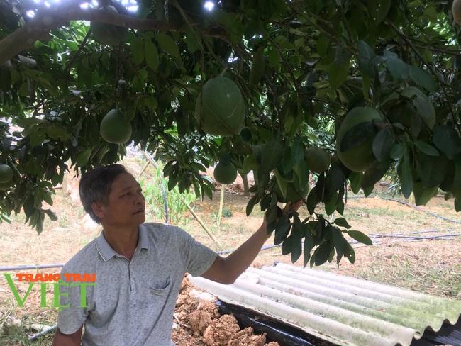 Hoà Bình: Phát triển nông nghiệp với thị trường tiêu thụ - Ảnh 4.