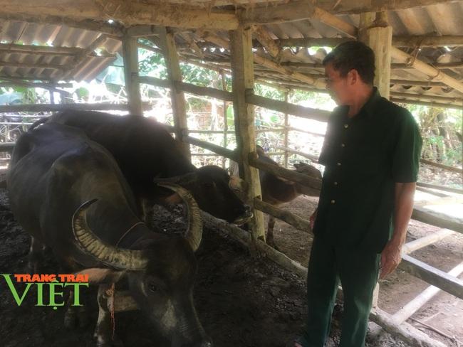Hoà Bình: Phát triển nông nghiệp với thị trường tiêu thụ - Ảnh 3.